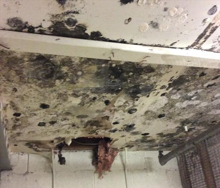 Small Leak Causes Large Mold Issue in Danbury, CT