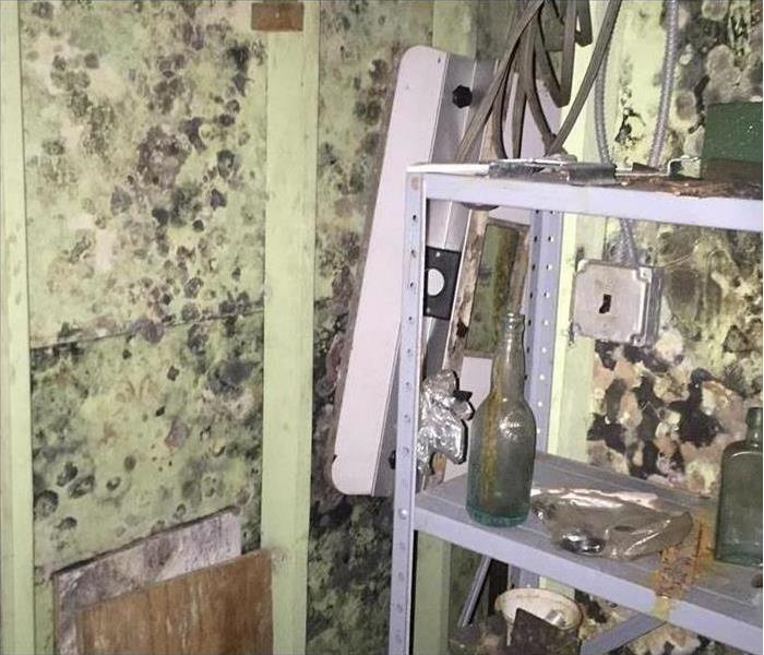 A room in a house, there is a shelf with some bottles and the walls are covered with mold.