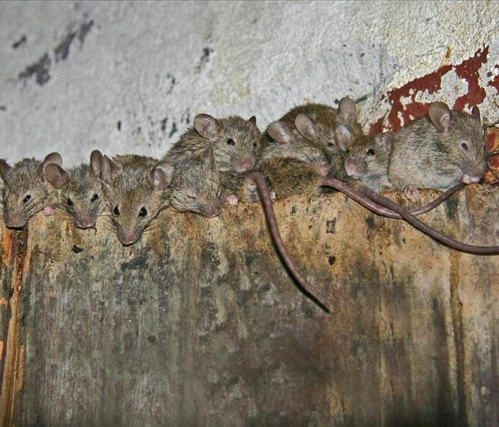 Biohazard Have Mice Invaded Your Danbury, CT Home or Business?