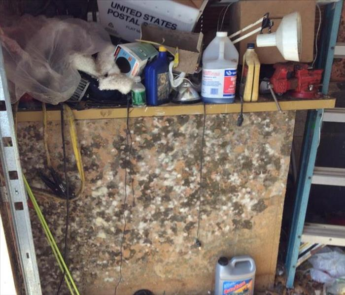 Mold Remediation Helping Reduce Mold Contamination in your Ridgefield Home