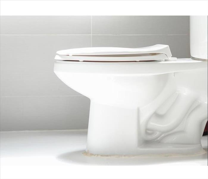 Water Damage Bathroom Leaks: Fixing a Leaky Toilet